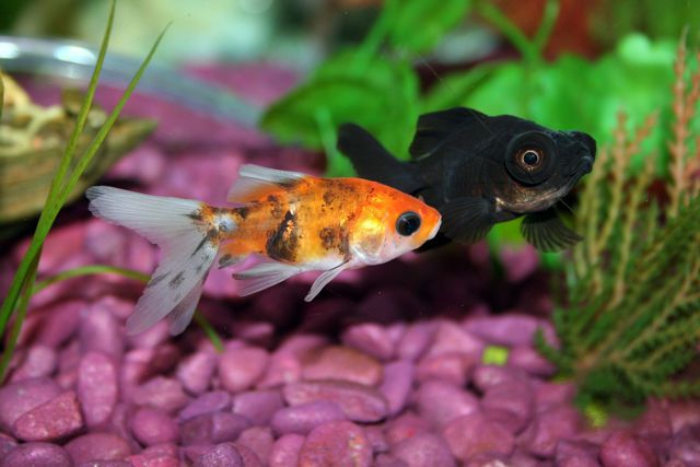 offerta occasione acquari acquario pesci pesci tropicali mangimi pesci agrisole crema