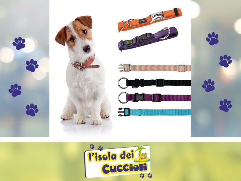 offerta collare per cane narni - promozione collari professionali narni - isola dei cuccioli