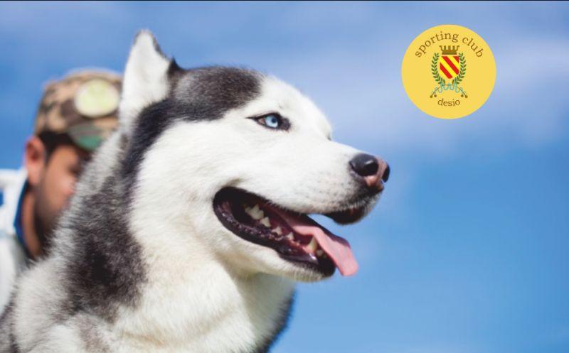 SPORTING CLUB DESIO offerta spazio per addestramento cinofilo - promo spazio educazione cani