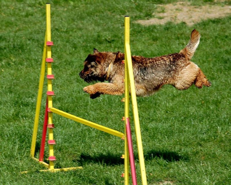 offerta scuola addestramento cani - scuola educazione gentile cane - dog school nicosia
